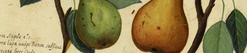 Detail of print of fruit - image